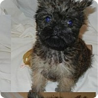 Adopt A Pet :: Brogran - Antioch, IL