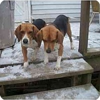 Adopt A Pet :: Buck & Todd - Indianapolis, IN