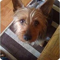 Adopt A Pet :: Job - Fresno, CA