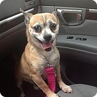 Adopt A Pet :: Chunky Monkey - Los Angeles, CA