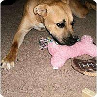 Adopt A Pet :: Sandy - Nashville, TN