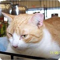Adopt A Pet :: Eleanor - Riverside, RI