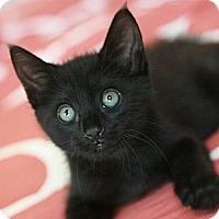 Adopt A Pet :: Livingston - Canoga Park, CA