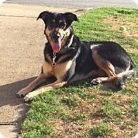 Adopt A Pet :: Stella (Guest) - Roswell, GA