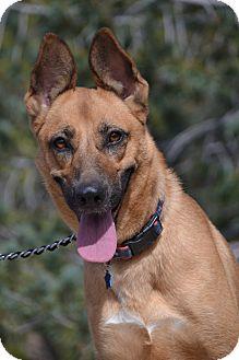 German Shepherd Dog Mix Dog for adoption in Altadena, California - Libby