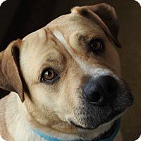 Adopt A Pet :: Jake - Green Bay, WI