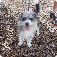 Adopt A Pet :: Branson - Thomasville, NC