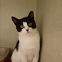 Adopt A Pet :: Ozzy - Middletown, NY