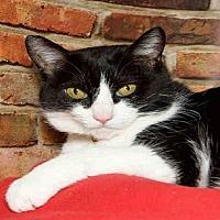 Adopt A Pet :: BANDIT - Alameda, CA