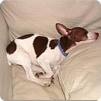 Adopt A Pet :: Tyler - Valparaiso, IN