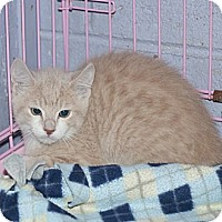 Adopt A Pet :: Buffy - New Martinsville, WV