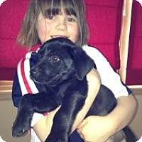 Adopt A Pet :: Puppies - Hancock, MI