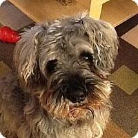 Adopt A Pet :: MeLou - Douglas, ON