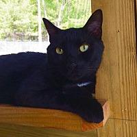 Adopt A Pet :: Gilmour - Huguenot, NY