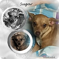 Adopt A Pet :: Sugar - Crowley, LA