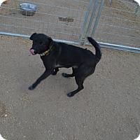 Adopt A Pet :: Leila - Peyton, CO