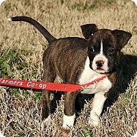 Adopt A Pet :: Maddie - Windham, NH