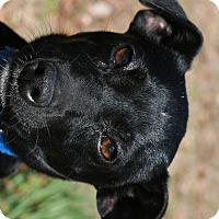 Adopt A Pet :: Flash - Attalla, AL