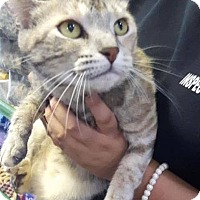 Adopt A Pet :: Maui - THORNHILL, ON