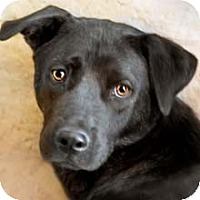 Adopt A Pet :: Rosebud - Phoenix, AZ