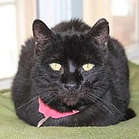 Adopt A Pet :: Dellie - Iroquois, IL