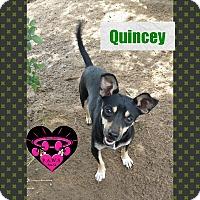 Adopt A Pet :: Quincey - Fowler, CA