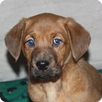 Adopt A Pet :: Barrett - kennebunkport, ME