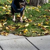 Adopt A Pet :: Truffles - Rosamond, CA