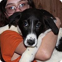 Adopt A Pet :: Amanda - Harmony, Glocester, RI