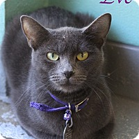 Adopt A Pet :: Eve - Bradenton, FL