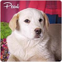Adopt A Pet :: Pearl - Cincinnati, OH