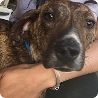 Adopt A Pet :: Titan - Byhalia, MS