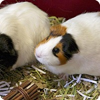 Adopt A Pet :: Flora and Hershey - Little Rock, AR