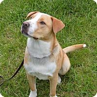 Adopt A Pet :: Whistle - Coeburn, VA