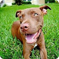 Adopt A Pet :: Eoin - Orlando, FL