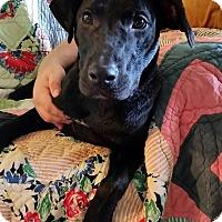 Adopt A Pet :: Duncan - Hartsville, TN
