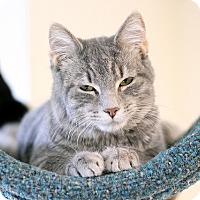 Adopt A Pet :: Tickertape - Chicago, IL