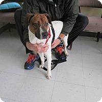 Adopt A Pet :: Larry - Providence, RI