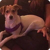 Adopt A Pet :: Krissy - Hamilton, ON