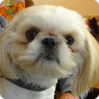 Adopt A Pet :: DUDESpending - Eden Prairie, MN