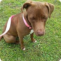 Adopt A Pet :: Nestlee - Lake Placid, FL