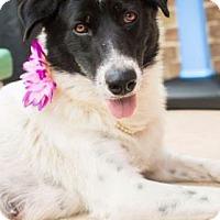 Adopt A Pet :: Cookie M. - Santa Fe, TX