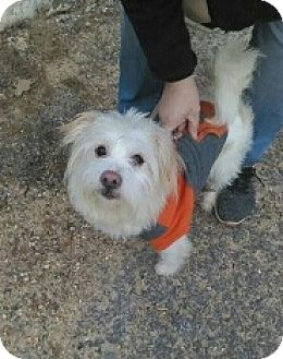 Terrier (Unknown Type, Medium) Mix Dog for adoption in Templeton, Massachusetts - Ruttler