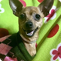Adopt A Pet :: Sparkles Flambeaux - Cleveland, OH