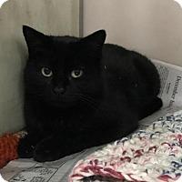 Adopt A Pet :: Kimber - North Haven, CT