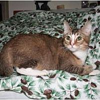 Adopt A Pet :: Pegasus - Santa Rosa, CA