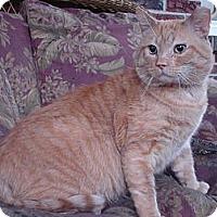 Adopt A Pet :: Simba - Chesapeake, VA