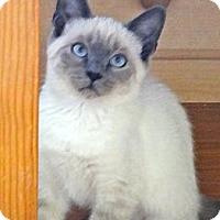 Adopt A Pet :: Kozar - Escondido, CA