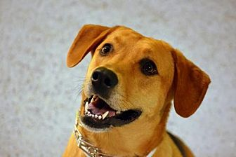 Shepherd (Unknown Type) Mix Dog for adoption in Rockville, Maryland - Casey