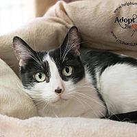Adopt A Pet :: Nicolette - Belton, MO